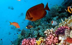 Caribbean Fish Wallpaper