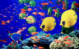 Colorful Underwater Wallpaper