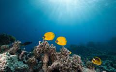 Live Yellow Marine Fish