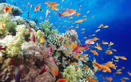 Underwater Tropical Fish Wallpaper